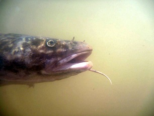 Anglers Can Help Endangered Fish