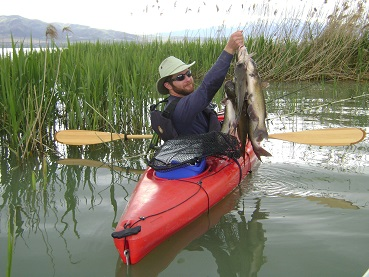 Channel catfish caught from a kayak on Utah Lake