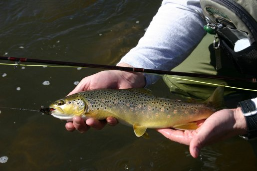 November is a great time to fish for brown trout. Browns strike flies        and lures aggressively during their spawn.