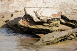 Lake Powell Quagga Mussel Infestation Evolving - More Boats Exiting Water with Mussels Attached