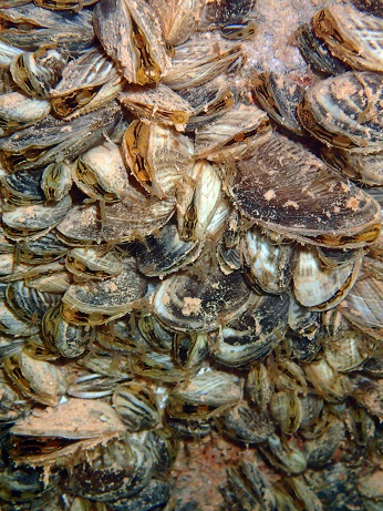 Plan ahead to decontaminate boats encrusted with mussels at Lake Powell